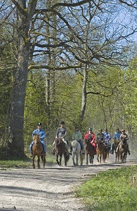 Vi rider för det mesta två- eller tretimmes-turer, där fika ingår. Men vi anpassar också turerna efter önskemål. Eftersom vi inte har mer än drygt 10 hästar i verksamheten är ju antalet deltagare per tur begränsat. Vi har dock några olika lösningar vid större sällskap.